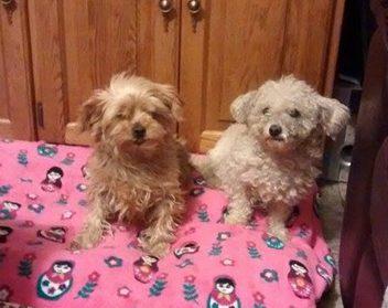 Daisy and Dolly