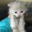 Uncared for Kitten found in car park