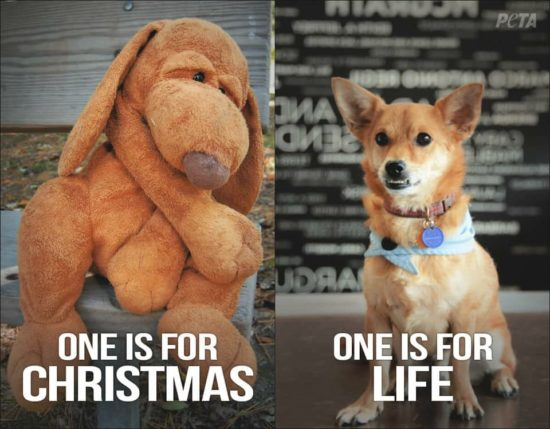 Puppies are not for Christmas!